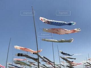 鯉のぼり4の写真・画像素材[4038348]