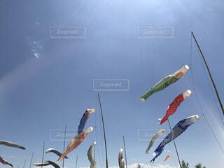 風景,空,屋外,景色,外,鯉のぼり,たくさん,5月,子供の日,日中