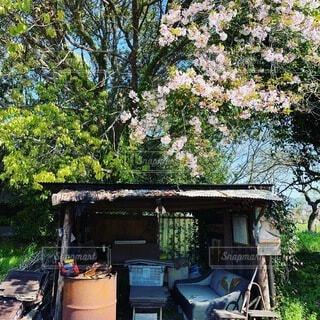 春,桜,樹木,草木,秘密基地