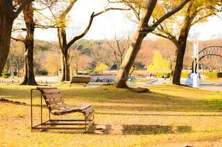 風景,公園,秋,屋外,夕焼け,ベンチ,影,草,樹木,日陰,リラクゼーション,穏やか