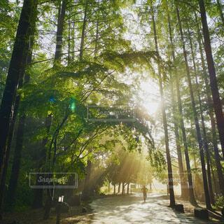 自然,風景,空,公園,森林,木,屋外,朝日,日光,景色,樹木,正月,ランニング,お正月,日の出,早朝,新年,初日の出,草木