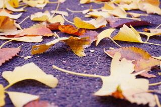 風景,秋,葉,景色,落ち葉,カエデ