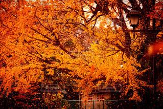 風景,秋,屋外,葉,景色,オレンジ,樹木,イチョウ,通り,落葉,草木,カエデ