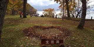 秋,紅葉,湖,草,樹木,ハート,支笏湖,落葉,草木