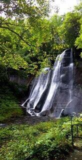 自然,風景,森林,屋外,緑,水面,滝,樹木