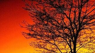 自然,風景,空,冬,夕暮れ,シルエット,オレンジ,樹木,新年,草木,一月,初投稿