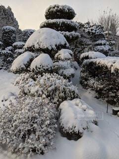自然,冬,雪,屋外,景色,樹木,岩,冷たい,日中,覆う