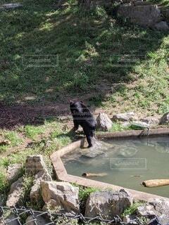 動物,屋外,後ろ姿,樹木,動物園,くま,熊,水浴び,草木,クマ