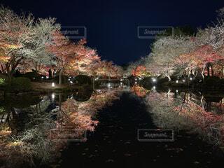 自然,夜,紅葉,京都,水面,樹木