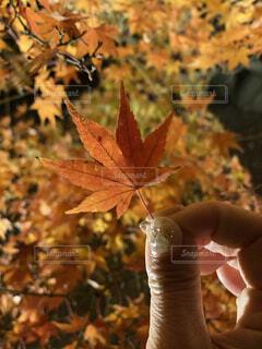 自然,紅葉,もみじ,紅葉狩り