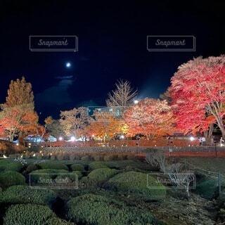 空,夜,紅葉,樹木,月,草木,紅葉回廊
