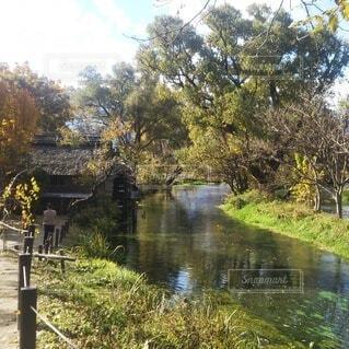 自然,川,水面,池,草,草木