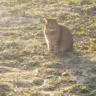 猫,屋外,草