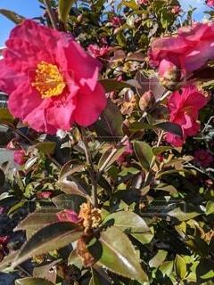花,冬,赤,花びら,草木