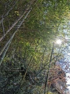 空,森林,屋外,太陽,樹木,竹,草木