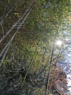 空,冬,屋外,竹,竹林
