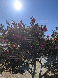 空,花,冬,屋外,太陽,樹木,草木