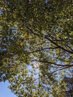 空,冬,屋外,太陽,葉,樹木,草木