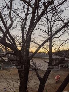 空,桜,屋外,朝日,樹木,日の出,草木,さくら