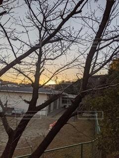 風景,空,桜,屋外,朝日,樹木,日の出,さくら