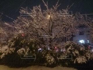 夜,夜空,雪,屋外,バラ,樹木,雪だるま,草木