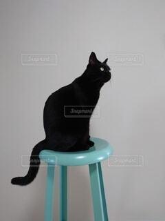 猫,動物,黒,cat,黒猫,kitty,ティファニーブルー,スツール
