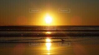 自然,海,太陽,朝日,赤,ビーチ,水面,海岸,オーストラリア,日の出,サーファーズパラダイス,水鳥