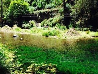 自然,風景,緑,川,水面,草,樹木,新緑,オーストラリア,草木,シドニー近郊