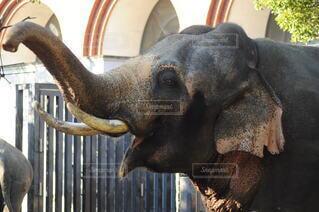 動物,黒,像,象,動物園,マンモス,インド象