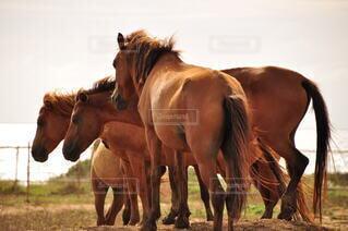 動物,屋外,茶色,景色,草,馬,立つ,日中