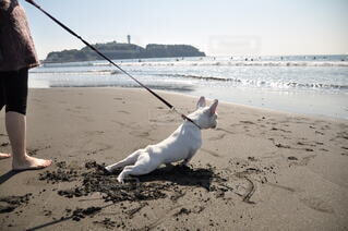 犬,空,夏,屋外,ビーチ,砂浜,水面,海岸,地面