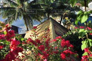 花,南国,家,樹木,クリスマス,リゾート,草木