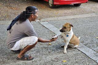 犬,風景,動物,屋外,人,地面,愛情,信頼