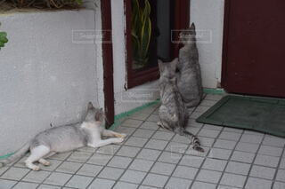 猫,動物,景色,床,子猫,グレー