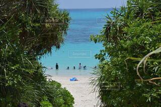 自然,海,空,屋外,砂,ビーチ,水面,海岸,景色,樹木,草木,パーム,日中,熱帯,休暇