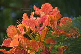 花,景色,オレンジ,新緑,草木,日中,ブルーム,山腹,フローラ