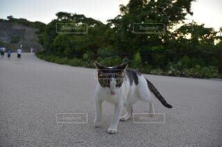 猫,風景,動物,屋外,白,道路,樹木,ネコ