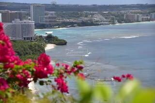 自然,風景,花,屋外,ビーチ,水面,海岸