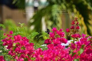 花,屋外,景色,樹木,草木