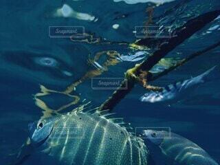 自然,風景,動物,魚,屋外,湖,ビーチ,水面,葉,海岸,泳ぐ,水中,カメ,ダイビング,シュノーケリング,爬虫類,水生,海洋生物学