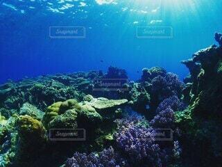 海,動物,スポーツ,魚,屋外,ビーチ,波,水族館,水面,葉,泳ぐ,水中,ダイビング,海底,コーラル,海洋無脊椎動物,海洋生物学