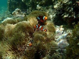 自然,海,動物,魚,水族館,水中,ダイビング,珊瑚礁,海底,コーラル,スキューバ ダイビング,海洋生物学,生命体