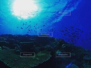 サンゴと魚のある水中の眺めの写真・画像素材[4049451]