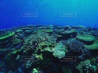 石垣島のサンゴの写真・画像素材[4049453]