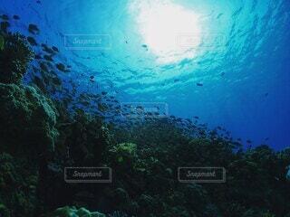 サンゴと魚の写真・画像素材[4049449]