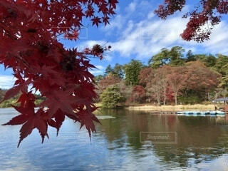 自然,公園,秋,紅葉,旅行,福島