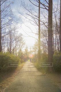 自然,空,公園,秋,森林,屋外,太陽,散歩,霧,樹木,道,旅行,草木,日中
