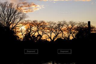自然,風景,空,屋外,夕暮れ,シルエット,樹木,冬の夕暮れ
