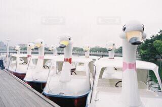 公園,鳥,ボート,船,池,スワンボート,アヒル,白鳥,休日,ノスタルジック,くもり,集合,フィルムカメラ,白鳥ボート,アヒルさんボート,足漕ぎボート,ペダルボート,サイクルボート