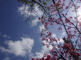 自然,空,花,春,桜,屋外,ピンク,太陽,雲,晴れ,枝,水色,華やか